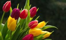 Çiçeklerin Güzellikleri İle Hayatınıza Güzellik Katın