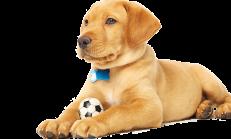 Köpek Maması Fiyatları Nedir?