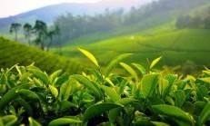 Bitkiler ile Bilgi Arşivi